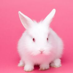 5 reasons not to buy a rabbit this Easter http://yhoo.it/Hb6O3z