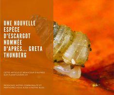 UNE NOUVELLE ESPÈCE D'ESCARGOT NOMMÉE D'APRÈS… GRETA THUNBERG! Simple Living, Lovers, News, Green, Snail, Baby Born, The Simple Life