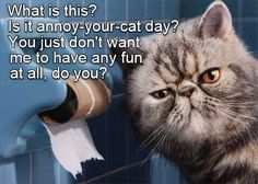 Annoy-your-cat Day http://cheezburger.com/9061607680