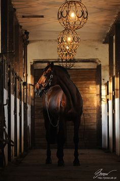 Horse shoe lighting is a must!!