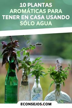 10 aromatic herbs you can grow at home using only water! Aromatic Herbs, Greenhouse Gardening, Green Art, Balcony Garden, Plant Care, Pretty Flowers, Ideas Para, Garden Design, Base