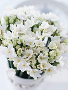 Witte bloemen...