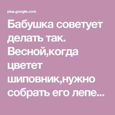 Бабушка советует делать так. Весной,когда цветет шиповник,нужно собрать его лепестки,примерно вам понадобится стакан лепестков,можно побольше.Свежесобра... - Igor Prikhodko - Google+