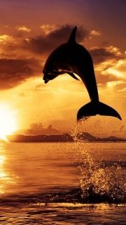 ...a leap into the sunset