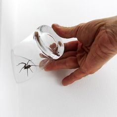 London designer James Laurie has cut the top of a drinking glass into a point so that it can be used to trap spiders in the corner of a room.