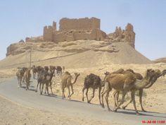 قلعة الرحبة قرب الميادين