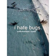 So much. Petrified. But not outside I'm just scared of them inside. Unless its a spider. Then the world might end.