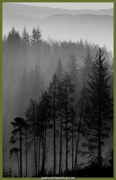 Maybe inside a wolf pawprint tattoo tree tattoo Forest Art, Tree Forest, Forest Drawing, Tree Tree, Conifer Forest, Foggy Forest, Misty Forest, Forest Painting, Wald Tattoo