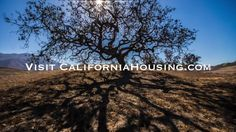 Thousand Oaks Single Story Home For Sale by Jeffrey Diamond Realtor