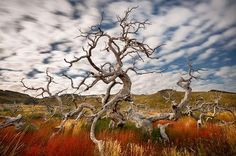I found this amazing tree sorrounded by autumn colors in Patagonia. It was a perfect day without wind and the silent embraced me while I stayed looking to it for several minutes.