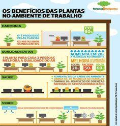 Os benefícios das plantas no ambiente de trabalho #plantas #saude #trabalho