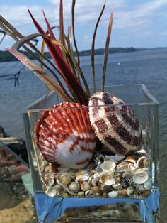 BEACH DECOR SEASHELL arrangement anchored in glass is perfect for coastal home or spa by justbeachynow