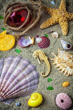 Seahorse With Many Sea Shells Photograph - Seahorse With Many Sea Shells Fine Art Print Summer Wallpaper, Flower Wallpaper, Shells And Sand, Sea Shells, Star Ocean, Orange Aesthetic, Shell Beach, Ocean Themes, Cross Paintings