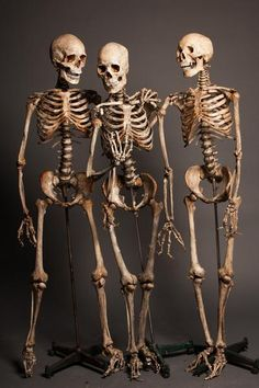 Image result for realistic skeleton