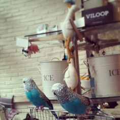Desde Londres estas aves fabulosas custodiaban nuestra pop-up store en #decoraccion2013 #madrid #decoracion #taxidermia #aves #barriolasletras #barriodelasletras
