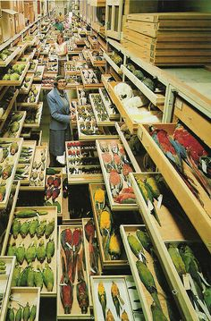 Smithsonian NMNH bird collection, photo by Chip Clark  Feather identification expert Roxie Laybourne, amidst a portion of NMNH's bird collection. Photo by Chip Clark. www.mnh.si.edu/onehundredyears/profiles/Chip_Clark.html  www.mnh.si.edu/rc/