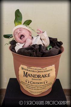Huxley's Baby Mandrake costume. #babymandrake