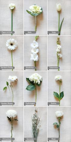 love all white flowers