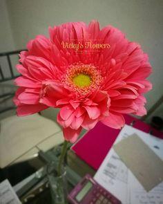 Muy buenos días followers. Ya llegaron las flores más lindas de toda la ciudad. Y esta hermosa gerbera tiene su lugar en mi escritorio. Bendiciones para todos!!! #quelasfloresnopasendemoda #masquefloressomossentimientos #gerberas