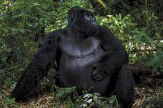 20160706 Tom Wilson and photog Michael C. Brown in Virunga Park #DRC