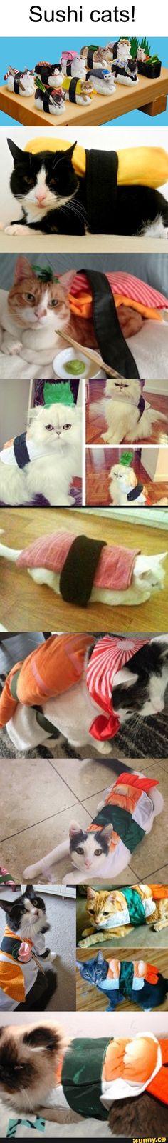 Sushi Cats! :3