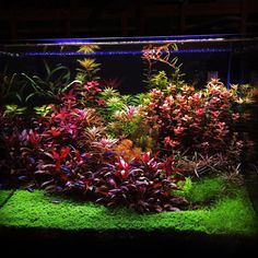 Simon's Aquascape Blog — Favourites: colourful tank by Castagnoli Simone ...