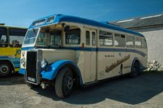 Leyland Coach Buses, Busses