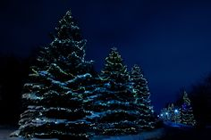 Blue Christmas ❖ Noël bleu by Lucie Gagnon on 500px
