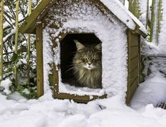 kitty in the dog house.