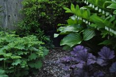 Variegated Solomon's Seal, Purple Palace Heuchera & Lady's Mantle. Great for shade and looks good all year round.