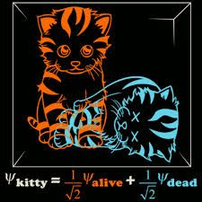 Risultati immagini per schrodinger cat