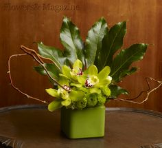 Green Cymbidiums and green Kermits buttons create drama against the backdrop of the fatsia leaves.  #flowersandmagazine #floral   #flowers