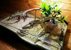 Page 5 of 8 - The lone Mangrove-New scape and mantis - posted in Members Aquariums: sooooooo about that video.....