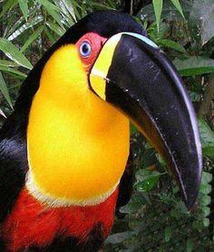 At lest unusual here Animal Design, Sea Creatures, Photo Wall, Birds, Fan Art, Pets, Parrots, Paisajes, World
