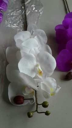 Our latex orchids