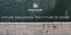 Biomimicry at SXSW Eco – Biomimicry Institute