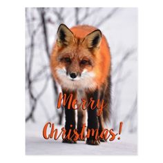 Fox in snow Christmas photo Postcard - merry christmas postcards postal family xmas card holidays diy personalize