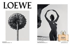 All Karl Blossfeldt, Arno, Art Commerce, Brand Campaign, Photo Reference, Loewe, Close Up, Herbalism, Stylists