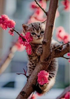 Kitties and flowers, the way to our hearts!