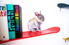 Hase goes surfing.....