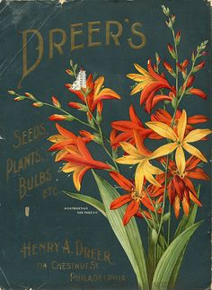 Seed Catalogs from Smithsonian Institution Libraries.  What is old is new again.  This plant has become popular again.   It is beautiful!