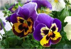 violeta flor - Buscar con Google