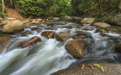 pluvial tropical forest - Pesquisa Google