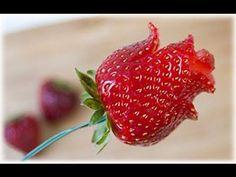 (1006) Pronti a regalare la vostra rosa di fragola? - YouTube
