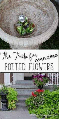 Gardening for Beginners Flower Pots. Beautiful Gardening for Beginners Flower Pots. How to Start A Beginner Ve Able Garden From Scratch Container Flowers, Container Plants, Container Gardening, Outdoor Flowers, Outdoor Plants, Fall Potted Plants, Outdoor Potted Plants, Outdoor Flower Planters, Porch Plants