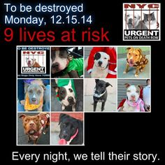 TO BE DESTROYED: 9 Dogs to be euthanized by NYC ACC- MON. 12/15/14. This is a HIGH KILL shelter group. YOU may be the only hope for these pups! ****PLEASE SHARE EVERYWHERE!  https://www.facebook.com/media/set/?set=a.611290788883804.1073741851.152876678058553&type=3