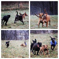 Fun in the snow flurries ❄️❄️❄️. #evasplaypupspa #dogs #dogcamp #doggievacays #dogsinnature #runfree #playtime #labsofinstagram #houndsofinstagram #dogsofinstagram #lifeisgood #badassbk #adoptdontshop #rescuedog #autumn #sweaterweather #endlessmountains #mountpleasant #PA #pennsylvania