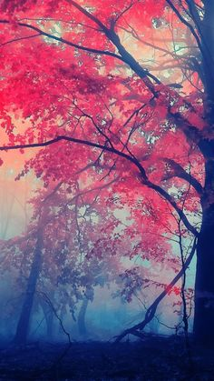 Nature Wallpaper: Autumn In the forest – Tap to see more beautiful nature wallpapers! Tree Wallpaper Iphone, Forest Wallpaper, Wallpaper Backgrounds, Colorful Backgrounds, Winter Backgrounds, Trendy Wallpaper, Iphone Backgrounds, Iphone Wallpapers, Mobile Wallpaper Android