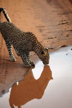Make one special photo charms for your pets, 100% compatible with your Pandora bracelets. Leopard In Reflection