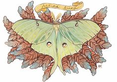 luna moth - The moth itself looks amazing, but I don't like the weird brown/grey leafy stuff around it.